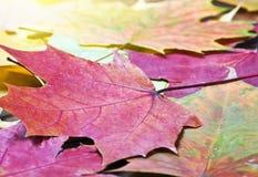 Покрашенная предпосылка листьев осени Стоковые Изображения