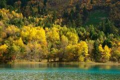 Покрашенная пуща с озером Стоковые Изображения