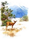 Покрашенная рука гор природы иллюстрации зимы акварели оленей животная Стоковая Фотография RF