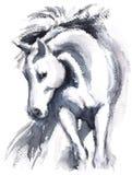Покрашенная рука иллюстрации акварели белой лошади животная Стоковые Изображения RF