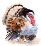 Покрашенная рука иллюстрации акварели птицы фермы Турции Стоковые Фото