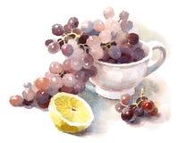 Покрашенная рука иллюстрации еды акварели виноградин Стоковое Изображение RF