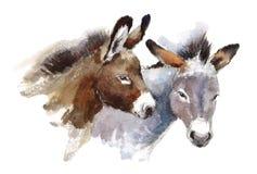 Покрашенная рука иллюстрации животных акварели ослов Стоковое Изображение