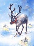 Покрашенная рука иллюстрации животных акварели северного оленя Стоковое Фото