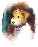 Покрашенная рука иллюстрации домашних животных акварели собаки терьера Fox Стоковые Изображения RF