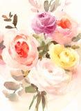 Покрашенная рука иллюстрации роз и цветков акварели лютика Стоковое Изображение RF