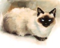 Покрашенная рука иллюстрации любимчиков животных акварели сиамского кота Стоковое фото RF