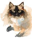 Покрашенная рука иллюстрации любимчиков животных акварели сиамского кота Стоковые Фотографии RF