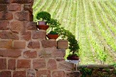 Покрашенная стена дома Стоковое фото RF