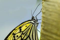 Покрашенная сторона бумажной бабочки змея Стоковое Изображение