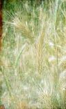 Покрашенная текстура предпосылки конспекта grunge стоковое изображение rf