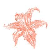 покрашенное вино предложения лилии Стоковая Фотография