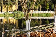 Покрашенное дерево в зеленом парке озера Стоковое Изображение RF