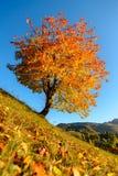Покрашенное дерево на голубом небе Стоковые Изображения