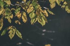 покрашенное золото осени выходит в яркий солнечный свет - винтажный ретро fi стоковое фото rf