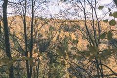 покрашенное золото осени выходит в яркий солнечный свет - винтажный ретро fi стоковые изображения
