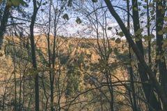покрашенное золото осени выходит в яркий солнечный свет - винтажный ретро fi стоковое изображение rf