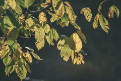 покрашенное золото осени выходит в яркий солнечный свет - винтажный ретро fi стоковое фото