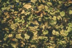 покрашенное золото осени выходит в яркий солнечный свет - винтажный ретро fi стоковое изображение