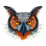 Покрашенное изображение акварели голодной птицы сыча ночи на белой предпосылке с красным апельсином наблюдает с яркими цветами Стоковое Фото