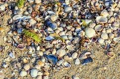 Покрашенное море обстреливает положение в золотом песке пляжа около воды, Стоковые Изображения RF