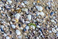 Покрашенное море обстреливает положение в золотом песке пляжа около воды, Стоковое Фото