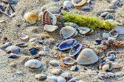 Покрашенное море обстреливает положение в золотом песке пляжа около воды, Стоковые Фото