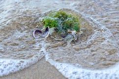 Покрашенное море обстреливает положение в золотом песке пляжа около воды, Стоковое фото RF