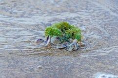 Покрашенное море обстреливает положение в золотом песке пляжа около воды, Стоковое Изображение RF