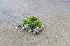 Покрашенное море обстреливает положение в золотом песке пляжа около воды, Стоковые Фотографии RF