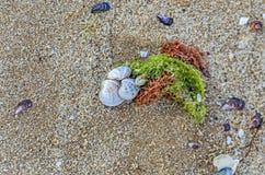 Покрашенное море обстреливает положение в золотом песке пляжа около воды, Стоковые Изображения