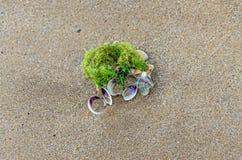 Покрашенное море обстреливает положение в золотом песке пляжа около воды, Стоковое Изображение
