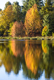 Покрашенное осенью отражение деревьев Стоковые Изображения