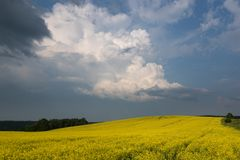 Покрашенное поле желтого цвета blossoming Ландшафт лета с облаками шторма Стоковое фото RF