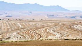 Покрашенное поле Стоковые Фото