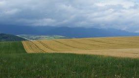 2 покрашенное поле в Словакии Стоковые Фото