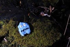 Покрашенное сокровище в лесе Стоковые Изображения RF