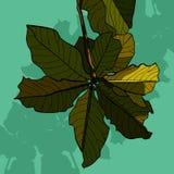 Покрашенное цветорасположение зеленых листьев дерева Стоковые Фото