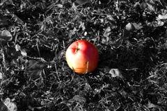 Покрашенное яблоко на серой траве Стоковое Фото