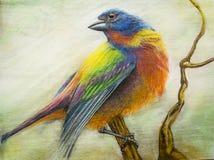 Покрашенное bunting искусство пастели птицы Стоковое Изображение RF