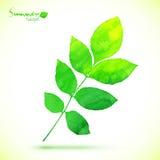 Покрашенные акварелью лист зеленого цвета вектора Стоковые Фото