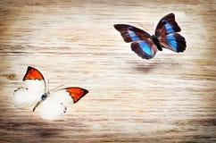 Покрашенные бабочки летая над светлой предпосылкой Стоковое Изображение RF