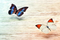 Покрашенные бабочки летая над светлой предпосылкой Стоковые Фотографии RF