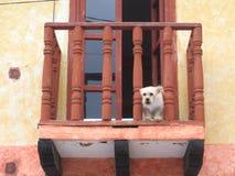 Покрашенные дверь и окно в Мексике стоковое фото