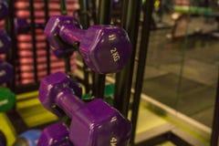 Покрашенные гантели в спортзале Стоковое Изображение RF
