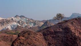 Покрашенные горы пустыни с деревом на верхней части Стоковое фото RF