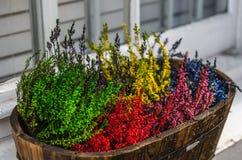 Покрашенные заводы в деревянном баке, зеленом цвете, красном цвете, желтом цвете, фиолетовый и голубой Стоковые Изображения