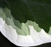 покрашенные зеленые листья Стоковая Фотография