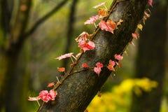 Покрашенные листья на дереве Стоковая Фотография RF