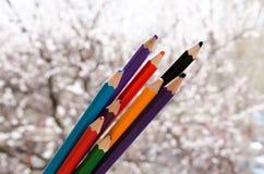 Покрашенные карандаши с покрашенными нашивками затем Цвета природы Crayons с цветя абрикосами на предпосылке Природа создается стоковое фото rf